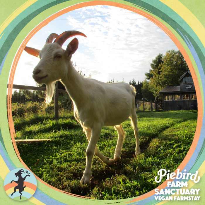 Farm Sanctuary Animal Liberation