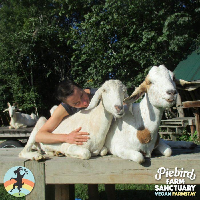 Ontario farm sanctuary, goat sisters